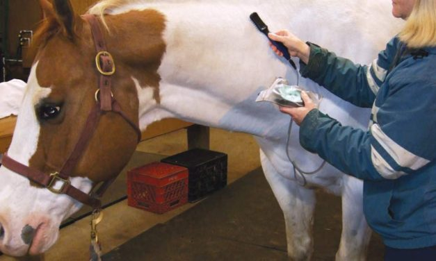 Smart Horse Care using the Matrix Best-Vet III