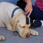 About the Best-Vet Microcurrent Device