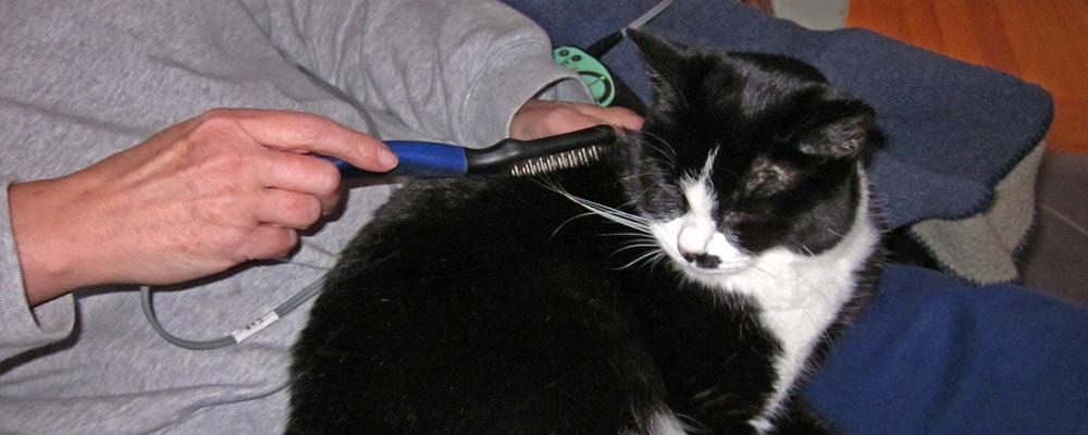 microcurrent-cat-comb-1