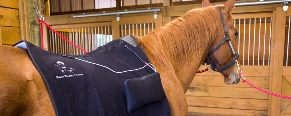 microcurrent-horse-backpad-slider