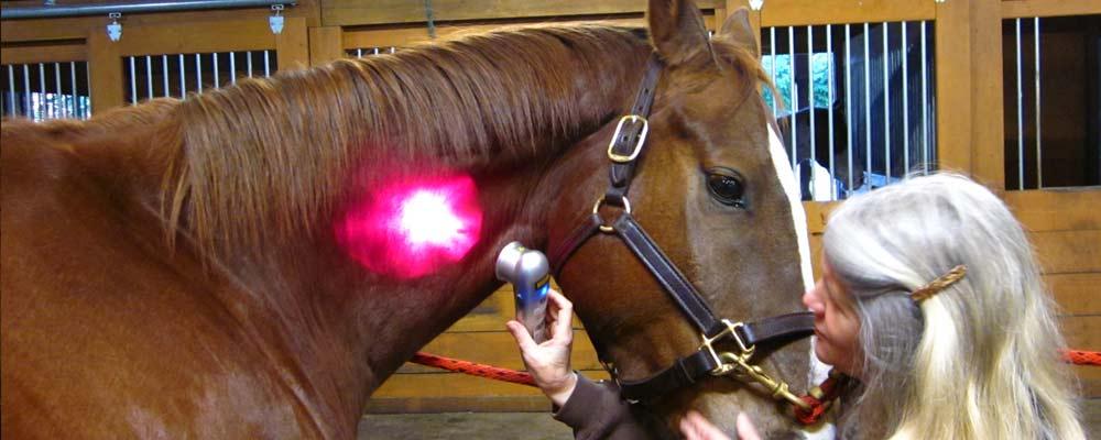 light-slider-horse1