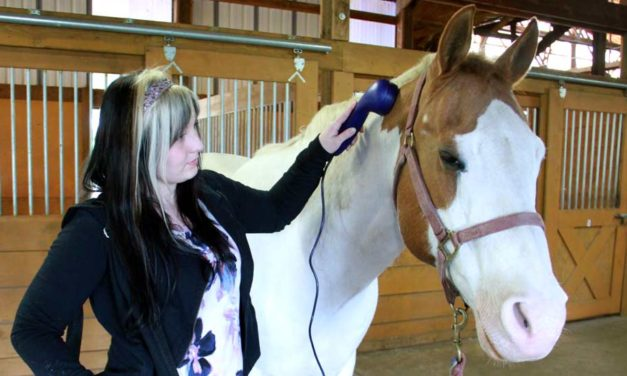 Comfort your Horse with Sound Waves: FAQ