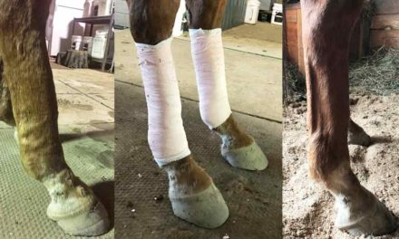 Case Study: Addressing an Old Leg Injury